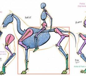 Referencias de Anatomía Animal