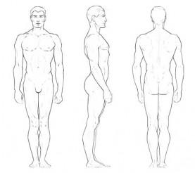 Proporciones de la Figura Masculina